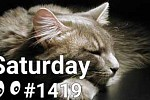 #1419 Verbs With Cats - Scratch, Relax, Squint, Stare, Smile
