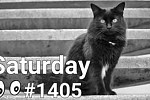#1405 Prepositions With Cats - In, On, Under