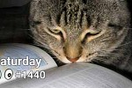 #1440 Verbs With Cats - Play, Drink, Hide, Read, Have A Nap